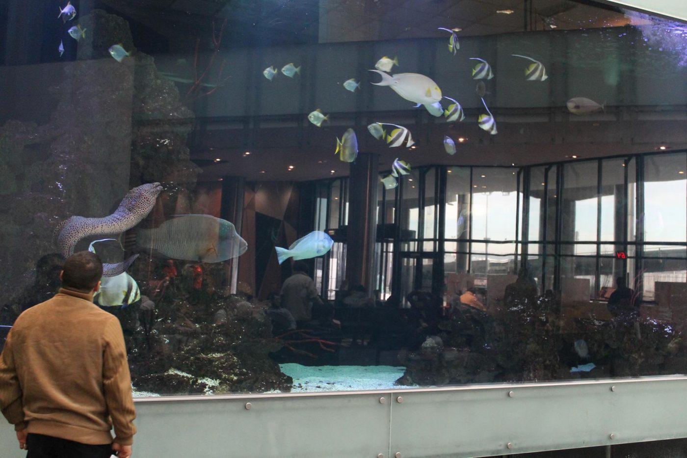 le plus grand aquarium priv 233 d europe est presque marsactu