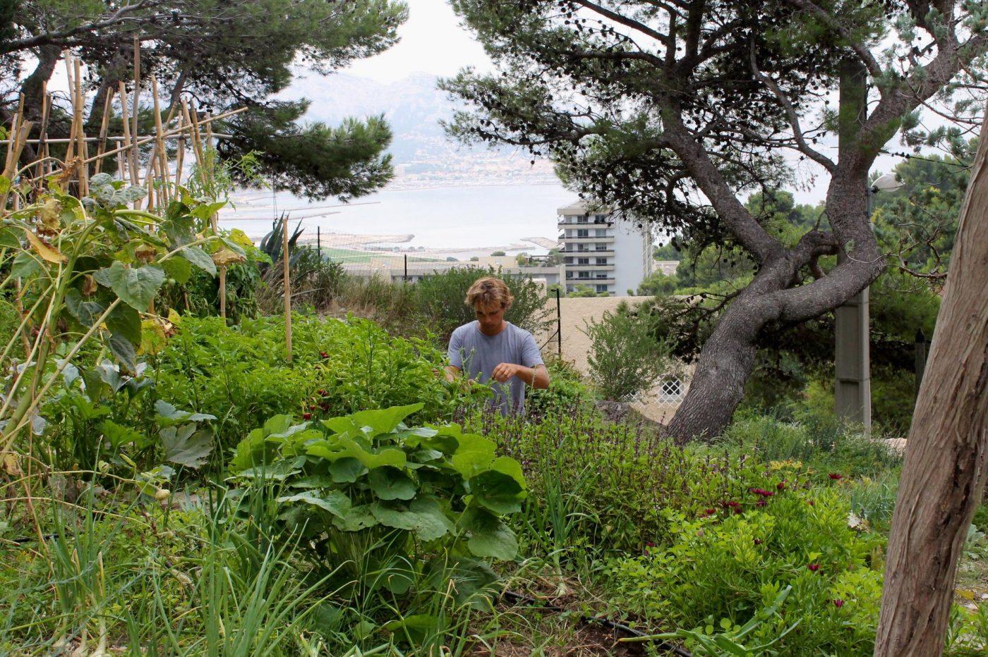 Le jardin sauvageon chappe encore la b tonisation for Jardin encore