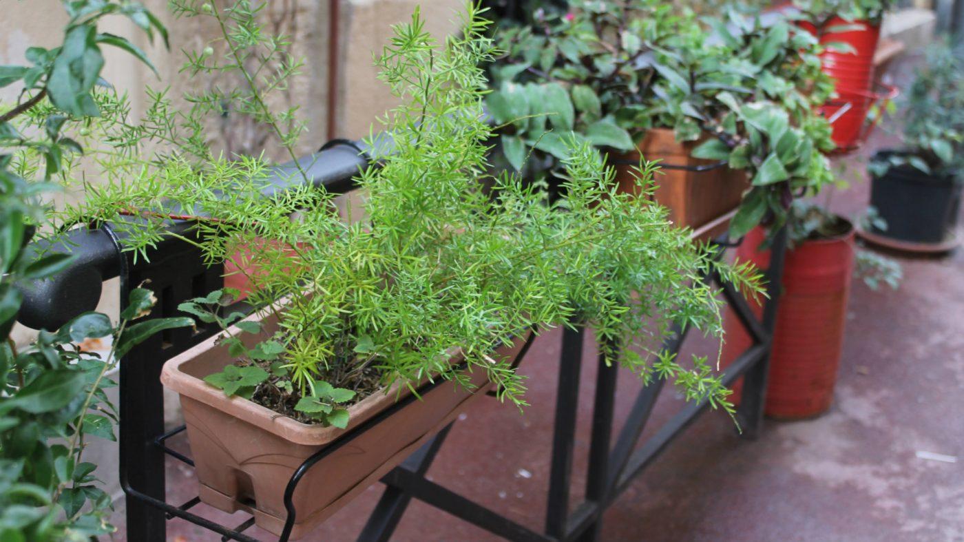 vegetalisation-classement