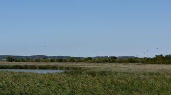 [Autour de l'etang] A Saint-Chamas, la Petite Camargue, ses oiseaux rares et ses chasseurs 1