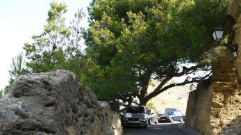 [Vieilles branches]Le pin penche qui a fait recule les camions a Miramas Le Vieux 1