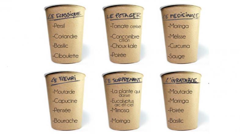 Aperçu des variétés CupPlante